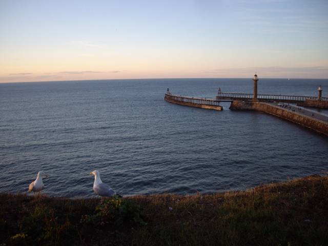 Seagulls at Sunset, Whitby UK photograph